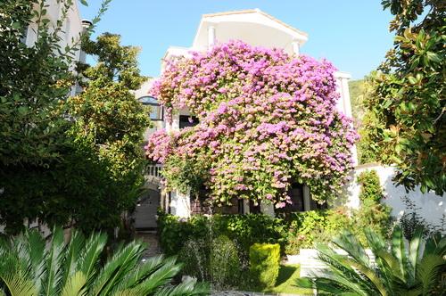 Черногория (авиа) Garden Pavlovic 4* Будва